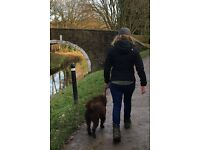 Dog Walking - Mr Snicket's Social Club - a new dog walking service in South Leeds / Wakefield