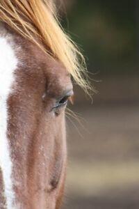 Jument quarter horse a vendre