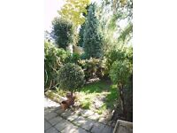 SOUTH FACING GARDEN, BEAUTIFUL 2/3 BED PERIOD SEMI DETACHED HOUSE WITH PERIOD FEATURES &
