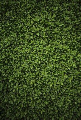 4x6ft Green grass board Theme Vinyl Photography Backdrop Studio Backgrounds