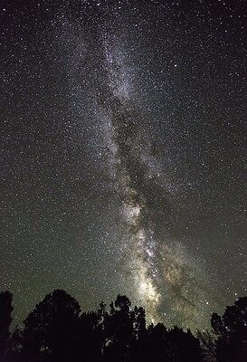 Milky Way Galaxy Above The Trees   Space Poster   Space Photo   Space Art Print