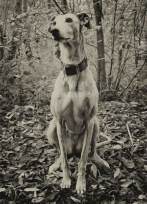Lurcher greeting card notelet greyhound whippet birthday photo dog brindle woods