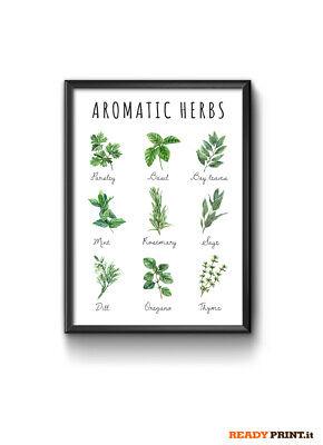 Stampa Aromatic Herbs mini Poster Cucina, Print Kitchen Herbs - size: 30X40...