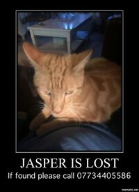 Jasper Male cat lost please help to find. Belfast markets area last seen.