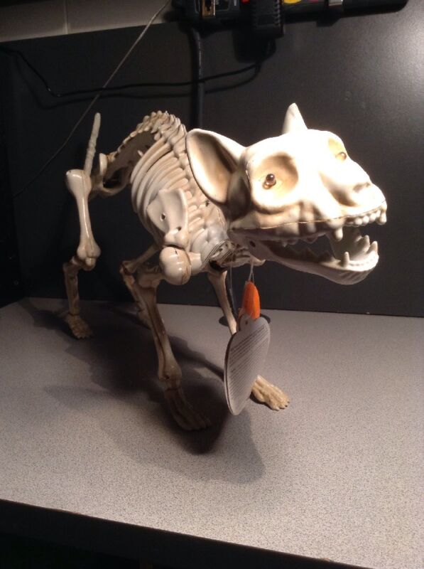 Halloween Skeleton Cat Animated Moving Jaw Sound Eyes Light Up Decoration Prop