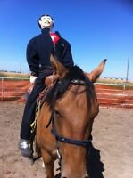 Colt starting - Horse training
