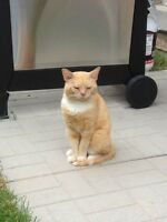 MISSING CAT - REWARD IF FOUND