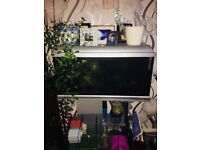 2ft by 1ft fish tank quick sale need gone