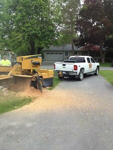 AFFORDABLE STUMP GRINDING AND REMOVAL. Kingston Kingston Area image 5