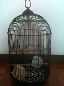 Medium/Large Black Wire Bird Cage or Wedding Wishing Well 60cm Bexley Rockdale Area Preview