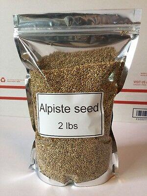 Alpiste Seed Canary Seed Birds Seeds Fresh Bird Food (2 Lbs)canaries