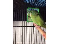 Parrotlets for a new home