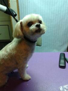 Sherry's Dog Grooming
