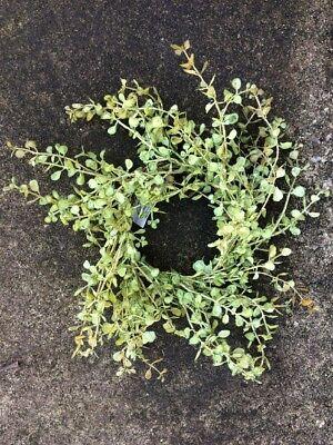 """10"""" MiNi WREATH FLORAL LT GREEN PEPPERGRASS ARTIFICAL GREENERY SILK FLOWER"""