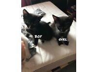 5 Kittens For Sale!