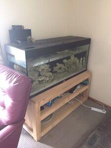 4ft fish tank (salt) Paralowie Salisbury Area Preview