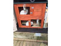 2 White Rabbits with hutches - free to good home