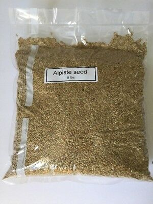 Alpiste Seed Canary Seed Birds Seeds (5Lbs)canaries (Plain Alpiste)vacuum Sealed