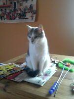 Scarborough Cat Sitting
