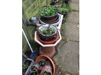 Large collection of pots and hanging baskets (BARGAIN)