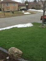 First Green Grass Never Have to Cut it!