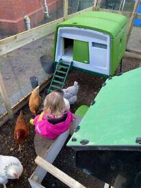 Eglu Cube - Large Chicken Coop