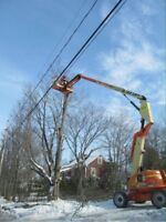 Tree removal and excavation