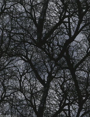 Patchworkstoff Dark Tree Gothic Stoffe Halloween Patchwork Bäume Baumwolle Deko
