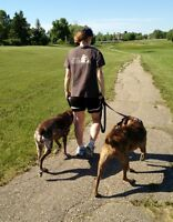 Professional Dog Training, Walking, & Pet-Sitting Services