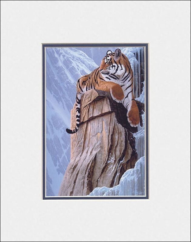 New BENGAL TIGER by CHRISTOPHER WALKER matted wild realism art print RETREAT