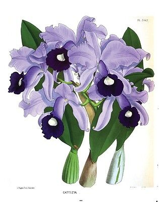 Orchids Album 31 Old Books  Flowers Over 500 Color Plates Growing Orchidaceous