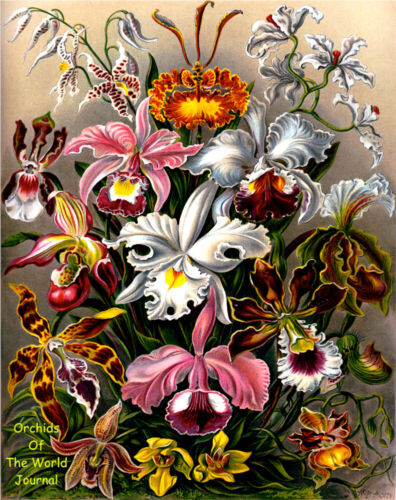 Orchids of the World Journal 8x10 Journal/Notebook 200 Ruled Pages Ernst Haeckel