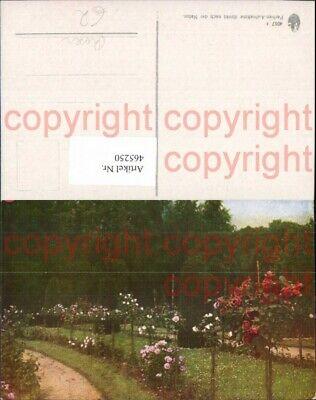 465250,Blumen Rosen Hochstamm Park Gartenanlage