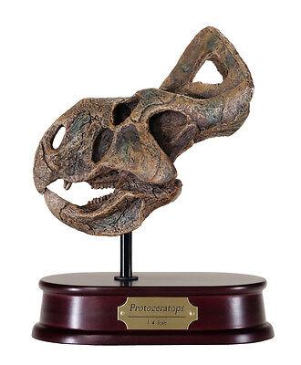 Protoceratops Dinosaur Skull Model Replica 1:4 Scale DinoStoreus