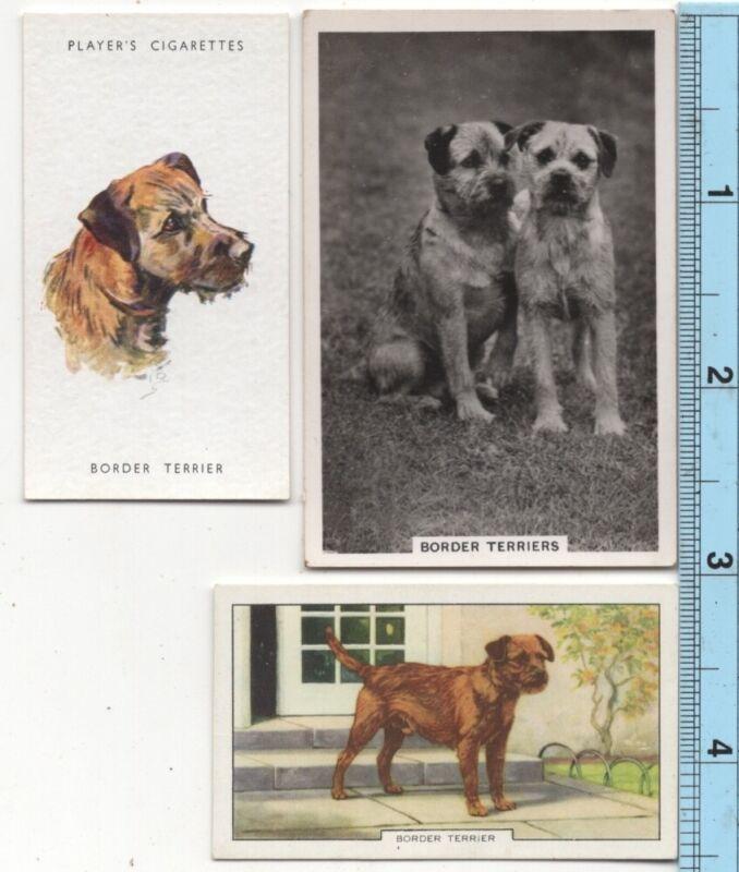 BorderTerrier Dog Pet Canine 3 Different Vintage Ad Trade Cards #4