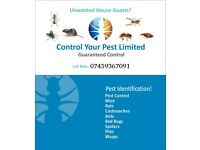 Bedbugs Mice pest Control Low price quick results in london CALL NOW