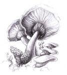 Taylor's Mushrooms