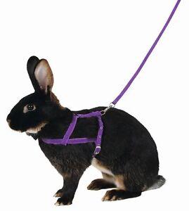 Kerbl Kaninchen Schultergeschirr mit Leine 2m lila M Schulter Geschirr Haustier