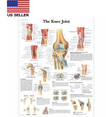 Knee Joint Poster Anatomy Reference Educational Poster 24x16