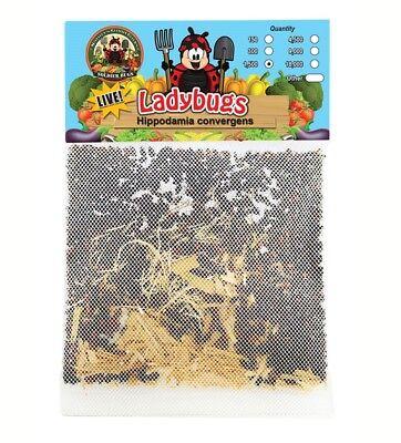 1500 Live Ladybugs - Guaranteed Live Delivery! - 1,500 Live Ladybugs