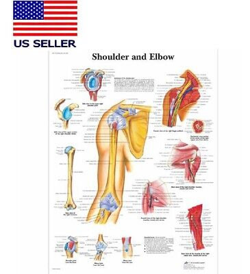 Shoulder And Elbow Anatomy Poster Anatomic Reference 16x24 Silk Paper