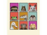 Set of 9 Framed Artworks Animal Pop Art Portrait Photography Picture Print