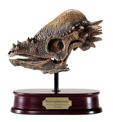 Pachycephalosaurus Dinosaur Skull Model Replica 1:4 Scale DinoStoreus