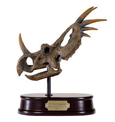 Styracosaurus Dinosaur Skull Model Replica 1:10 Scale DinoStoreus