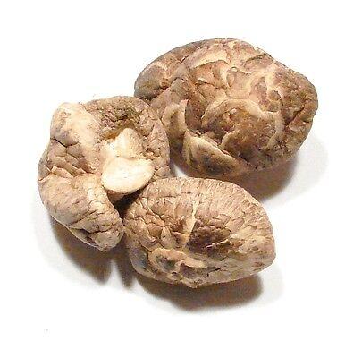Shitake Mushrooms -1Lb- Dried Japanese Shitake Mushrooms Grade AA