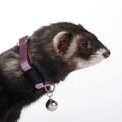 MARSHALL PET FERRET COLLAR WITH BELL PURPLE JINGLE FREE SHIPPING TO USA -