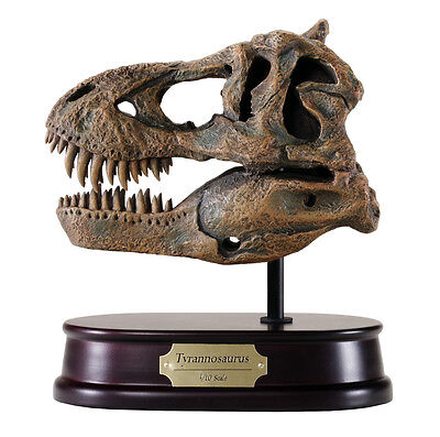 Tyrannosaurus Rex / T.rex / T-Rex Dinosaur Skull Model Replica 1:10 Scale