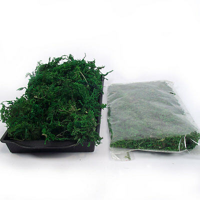 Small Bag of Dried Artificial Preserved Reindeer Moss