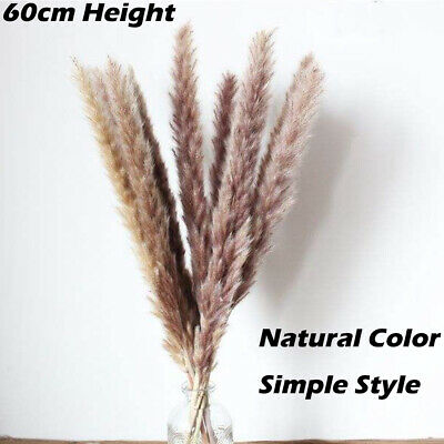 Home Decoration - 15X Large Natural Dried Pampas Grass Reed Home Wedding Flower Bunch Home Decor