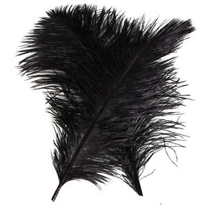 New-10-PCS-Wholesale-Quality-Natural-OSTRICH-FEATHERS-034-12-14-034-Inch-Black-Color